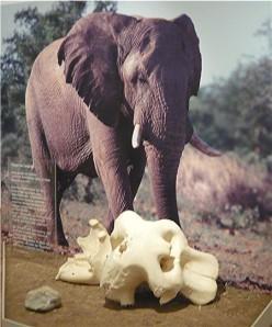 Trauernder Elefant